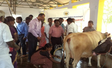 Dairy Farm in tamilnadu, hf cow and jersey cow for sale in
